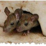 مكافحة الحشرات والنمل الابيض والصراصير والنمل بالدمام (1)